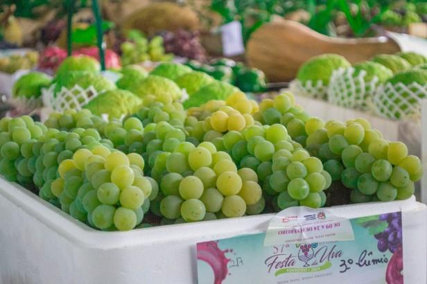 festa da uva vinhedo 2020